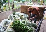 Produtores rurais do Vale do Ribeira contam com linha de crédito durante a pandemia